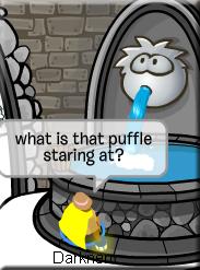 staring puffle